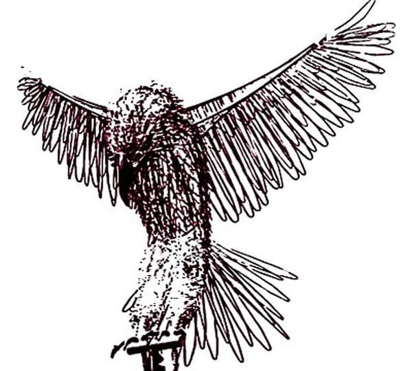 hawk alone_LARGE